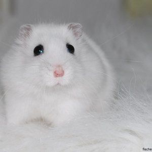 Donation fund for my hamster!!!